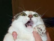 Испуганный кот шаблон мемгенератора