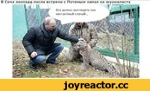 В Сочи леопард после встречи с Путиным напал на журналиста