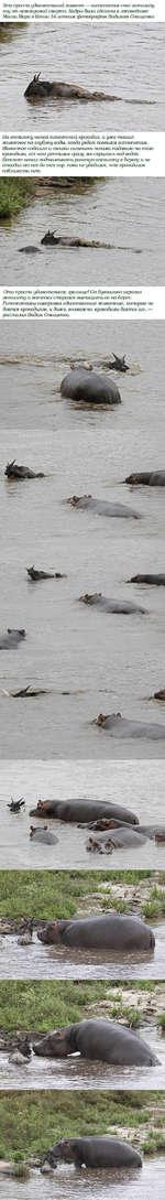 """'1°'^ Удивительный момент - гиппопотам спас антилопа Мпгп меМ1ШУ?*011 СМер""""Ш- 1<адРы 6ыли сделаны в заповеднике МасаиМара в Кении 34-летним фотографом Вадимом Онищенко На антилопу напал гигантский крокодил, и уже тащил на глубину воды, когда рядом появился гиппопотам. ротное подошло и своими сил"""