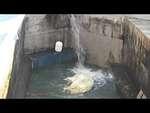 Новосибирский зоопарк. Каю дали воду,Nonprofit,,24.06.2014. Ночью спустили воду, чтоб почистить бассейн, а утром в 10 часов начали запускать воду. Услышав звук падающей воды, Кай тут же спустился на дно бассейна.