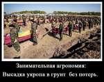 Занимательная агрономия: Высадка укропа в грунт без потерь
