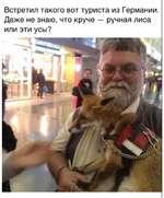 Встретил такого вот туриста из Германии. Даже не знаю, что круче — ручная лиса или эти усы?