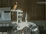 Попугай обделывается на котэ