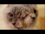 Двухголовый кот,Animals,котэ,мутант,чернобыль,кошка,кот,сиамские близнецы,две головы,три глаза,Двуликий кот по имени Фрэнк-и-Луи внесен в книгу рекордов Гиннесса. И вписали его в это всемирно знаменитое издание не за редкую двойную морду: такая мутация у кошек человечеству уже знакома. Дело в том, ч