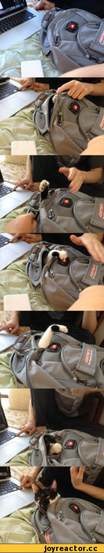 Котэ вылазит из сумки
