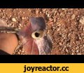 Frilled-Neck Lizard Attacks Man in Outback Australia,News & Politics,news,viral,Credit: Ricky Mackenzie To use this video in a commercial player or in broadcasts, please email licensing@storyful.com