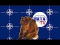 Зачем Путин НАТО возрождает. Или все наоборот,News & Politics,Вата ТВ,vata tv,Вата tv,ватные новости,вата news,приколы,приколы 2016,путин,россия,putin,russia,НАТО,NATO,саммит,Варшава,новости спорта,Олимпиада 2016,дисквалификация,Украина,Ukraine,дружба с Украиной,росийско-украинский,резервный фонд,эк