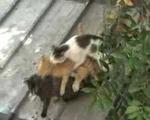 Evsiz kediler sokağı comedy izle ve şaşır bu kediler