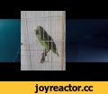 Eminem's The Monster but Rihanna replaced with a Parrot,Pets & Animals,rihanna,parrot,monster,the monster,eminem,bird,parrot rihanna,rihanna parrot,edit,rihanna bird,Completo papagaio canta rihanna,amazon rihanna,amazon parrot,amazon singing,parrot singing,bird singing,bird singing rihanna,parrot