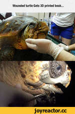 Wounded turtle Gets 3D printed beak...