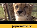 Мяукающие гепарды,Nonprofits & Activism,,https://twitter.com/hoewever/status/878444051271438336