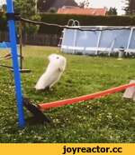 White | Rabbit | Trippin