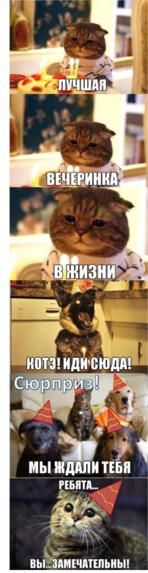 приколы про кошек до слез видео смотреть