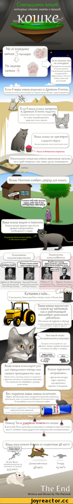 XrAnzu Семнадцать вегцей которые стоит знать о вашей .кошке-' Если только она не полидакт Полидактия это явление многопальцевости. Самый большой процент полидактов был зафиксирован в Бостоне. Кошки имели там до 8 пальцев. Если б ваша кошка родилась в Древнем Египте, египтяне могли бы её испо
