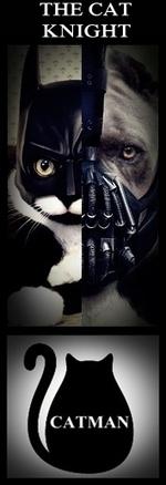 THE CAT KNIGHT %