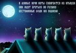 в лунные ночи коты соБИРаются на крышах. они ждут братьев по разуму. бестолковые люди им надоели