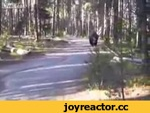 Тот момент когда нет права на ошибку,Animals,,Огромный бизон проходит в сантиметрах от ребят